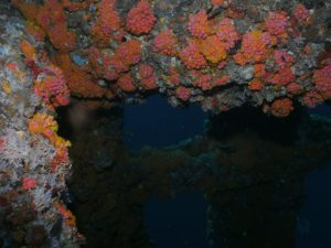 coral on gulf of mexico oil rig